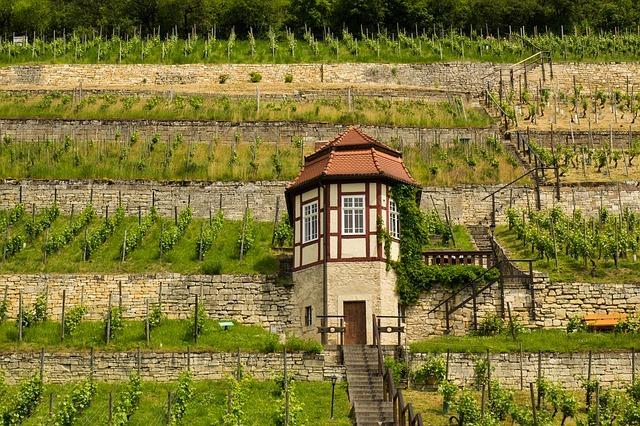 Weinhang in Freyburg